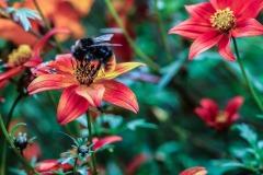 flower-2651663_1920.jpg